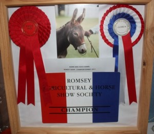 Bunns Miss Coco Chanel Donkey In Hand Champion - Romsey Show
